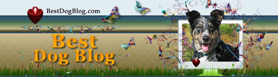 Best Dog Blog Header